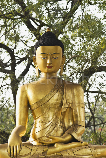 Standbeeld buddha park new delhi Indië boom Stockfoto © imagedb