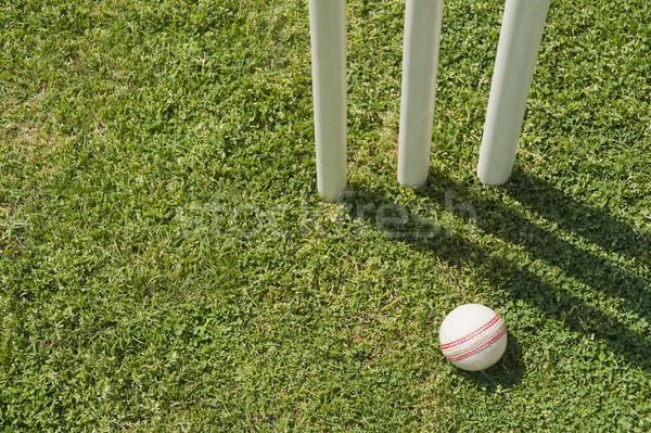 мнение мяча трава древесины спорт Сток-фото © imagedb
