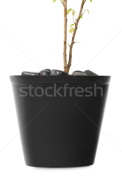 Primer plano planta reflexión fondo blanco primer plano Foto stock © imagedb