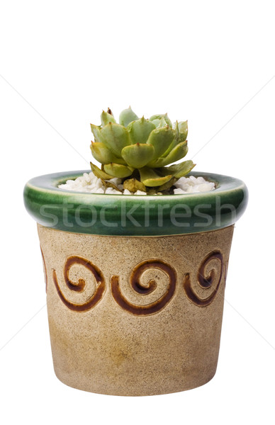 Folha planta crescimento fotografia isolado Foto stock © imagedb