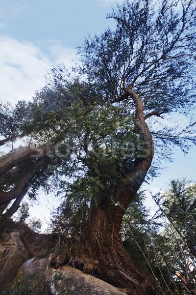 Alulról fotózva kilátás fa erdő égbolt természet Stock fotó © imagedb
