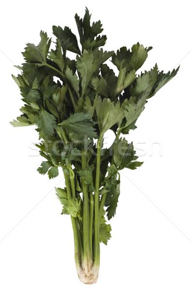 продовольствие лист растительное трава Сток-фото © imagedb