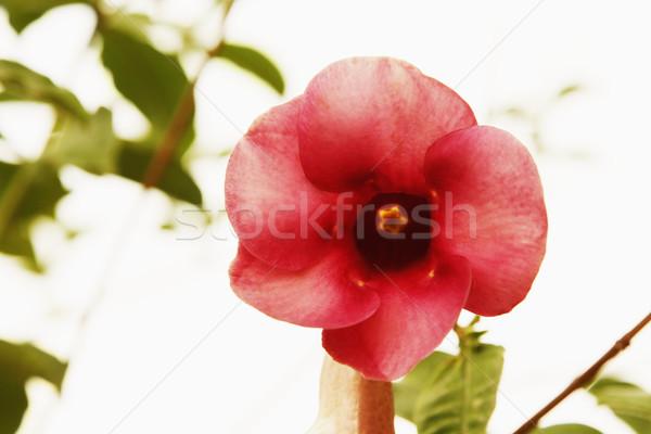 çiçek park kırmızı bitki fotoğrafçılık Stok fotoğraf © imagedb