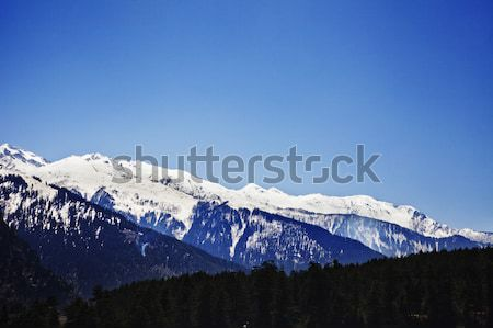 Forest with snow covered mountains in the background, Manali, Hi Stock photo © imagedb