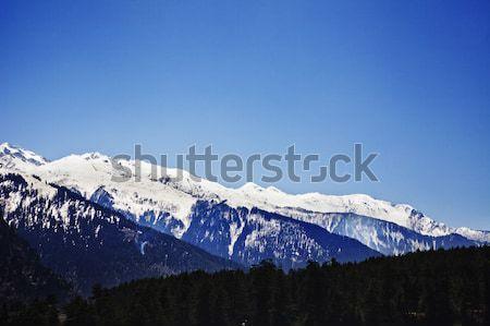Bos sneeuw gedekt bergen berg winter Stockfoto © imagedb