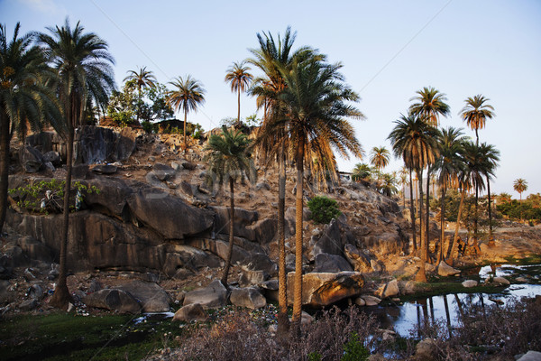 Palm trees with rock formations at Guru Shikhar, Arbuda Mountain Stock photo © imagedb