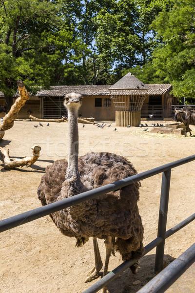Autruche zoo Barcelone arbre oiseau clôture Photo stock © imagedb