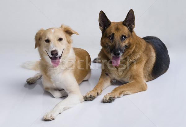 2 犬 座って 一緒に 犬 ペット ストックフォト © imagedb