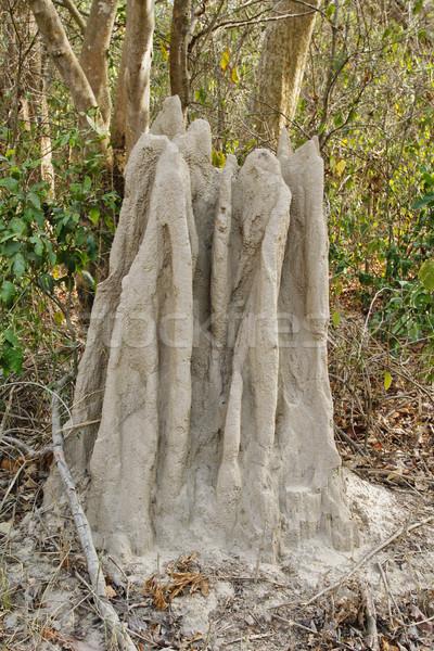 Bielec lasu parku drzewo krajobraz Hill Zdjęcia stock © imagedb
