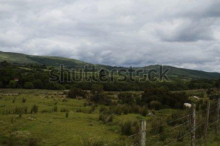 羊 丘 公園 共和国 アイルランド 草 ストックフォト © imagedb