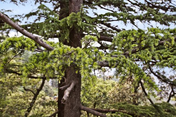 Fa erdő India ág fotózás turizmus Stock fotó © imagedb