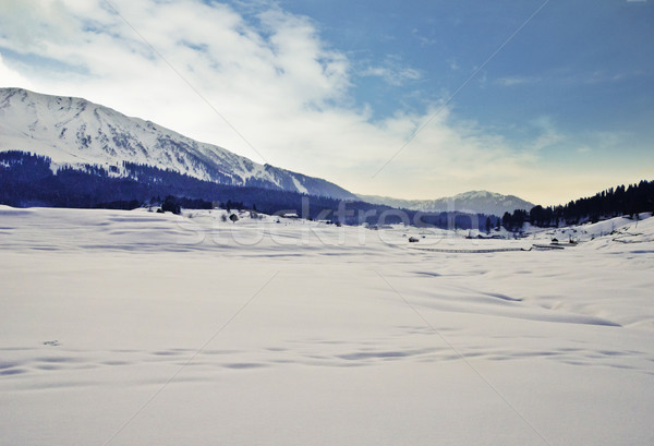 Kar kapalı vadi kış Hindistan ağaç Stok fotoğraf © imagedb