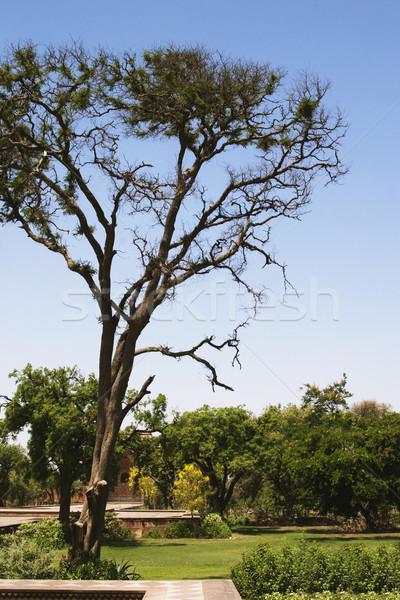 Giardino mausoleo tomba albero impianto Foto d'archivio © imagedb