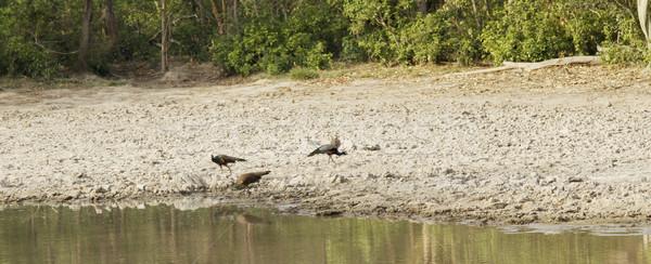 пруд лес парка воды дерево пейзаж Сток-фото © imagedb
