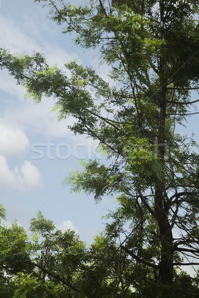 Vista árbol distrito cielo rama Foto stock © imagedb