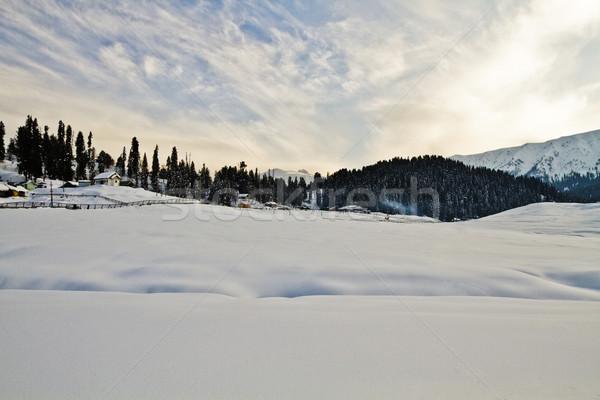 Drzew śniegu pokryty Hill Indie krajobraz Zdjęcia stock © imagedb