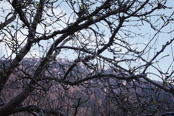 Meztelen fák erdő hegyek égbolt hegy Stock fotó © imagedb
