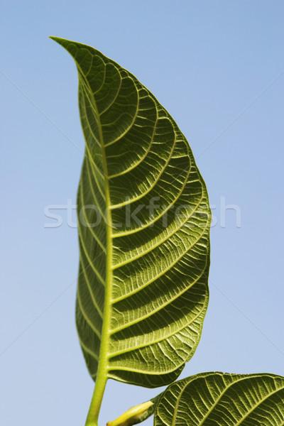 クローズアップ 葉 庭園 5 ニューデリー インド ストックフォト © imagedb