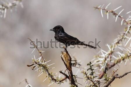 Safari парка Намибия птица природы пустыне Сток-фото © imagex