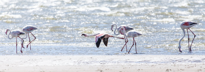 фламинго Flying Намибия птица полет воды Сток-фото © imagex