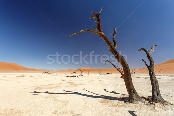 Morto Namíbia deserto África terra viajar Foto stock © imagex