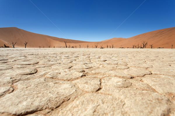 мертвых Намибия пустыне Африка небе дерево Сток-фото © imagex