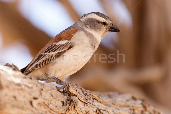 женщины птица Намибия пустыне Африка животного Сток-фото © imagex