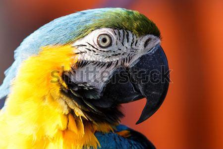 Mavi sarı Namibya Afrika kuş hayvan Stok fotoğraf © imagex