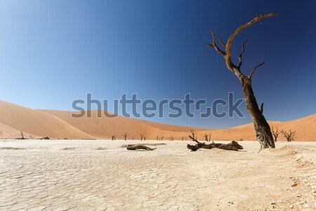 мертвых Намибия пустыне Африка земле путешествия Сток-фото © imagex