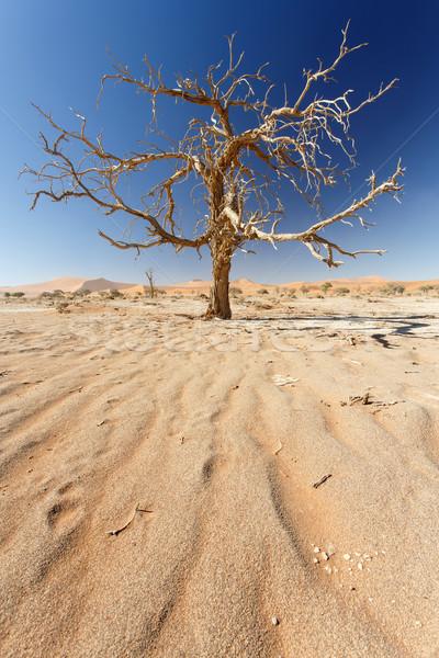 мертвых деревьев Намибия пустыне Африка небе пейзаж Сток-фото © imagex