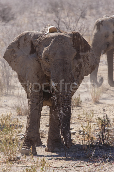 éléphant Safari parc Namibie radio Voyage Photo stock © imagex