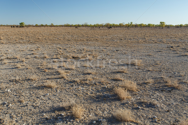 Etosha Safari Park in Namibia Stock photo © imagex