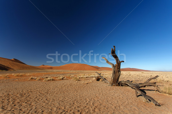 Dead Tree at Sossusvlei, Namibia Stock photo © imagex