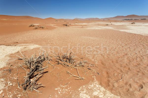 死んだ ナミビア 砂漠 アフリカ 空 風景 ストックフォト © imagex