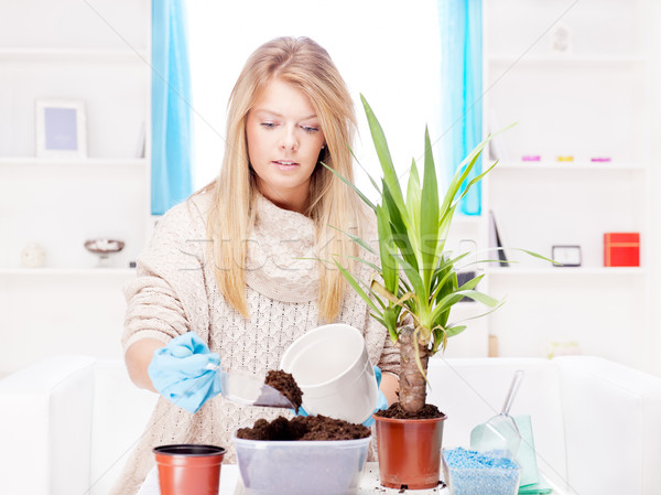 woman transplant plant in a bigger pot Stock photo © imarin