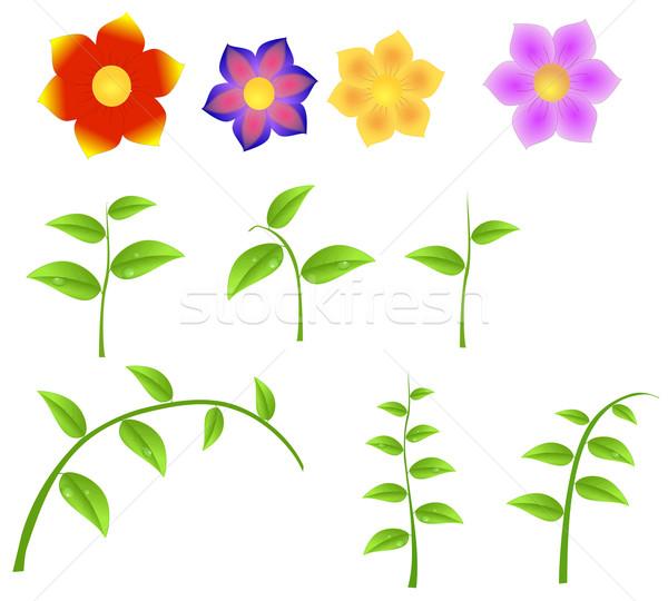 Conjunto flores primavera isolado branco Foto stock © impresja26