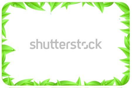 Yeşil sınır yaprakları sayfa uzay Stok fotoğraf © impresja26