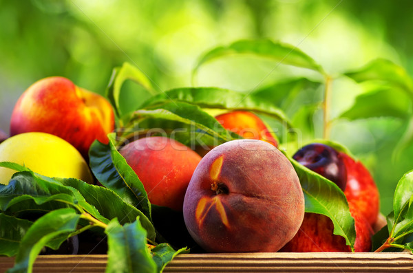 Peach and various fruits Stock photo © inaquim