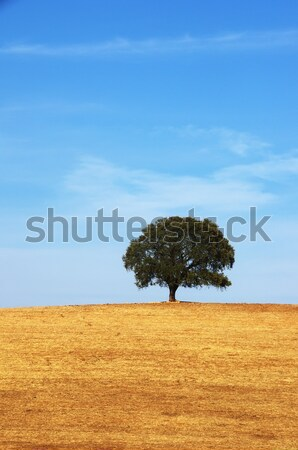 solitary tree in plowed field Stock photo © inaquim