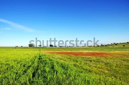 Tájkép mező égbolt tavasz háttér nyár Stock fotó © inaquim