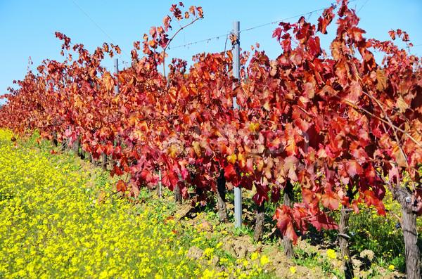 Sonbahar bağ güney Portekiz şarap doğa Stok fotoğraf © inaquim