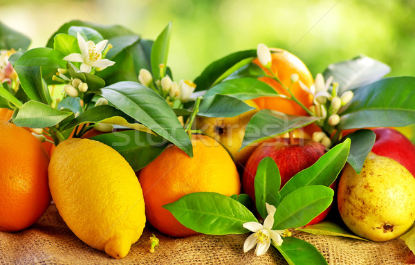 Fresh fruits on table. Stock photo © inaquim