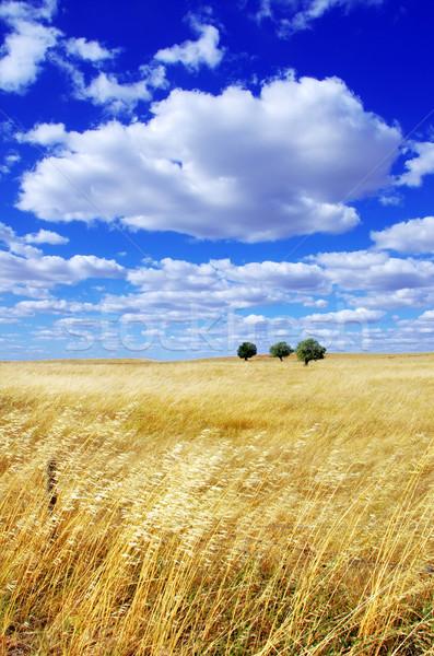 Panorama regione albero sfondo estate campo Foto d'archivio © inaquim