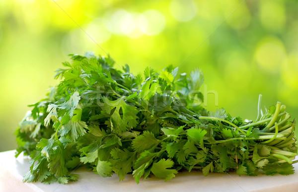 Coriandolo verde natura sfondo mangiare cuoco Foto d'archivio © inaquim