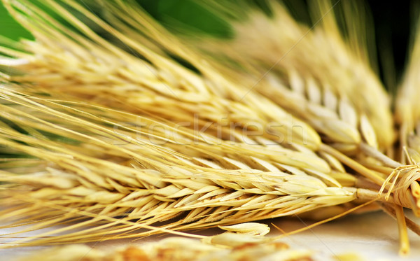 Bundle of Wheat spikes Stock photo © inaquim