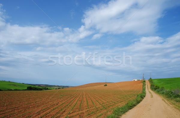 Mezőgazdasági mező dél tavasz fű természet Stock fotó © inaquim