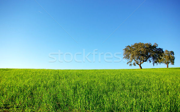 дуб деревья Португалия небе цветок Сток-фото © inaquim