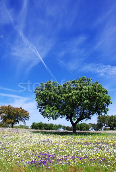Dąb drzew wiosną Portugalia kwiat charakter Zdjęcia stock © inaquim