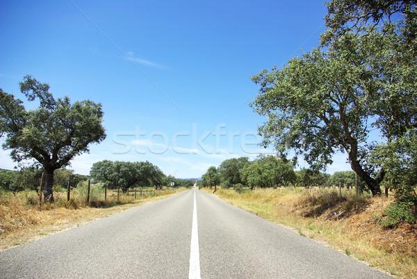 Yol alan Portekiz ağaç yeşil mavi Stok fotoğraf © inaquim