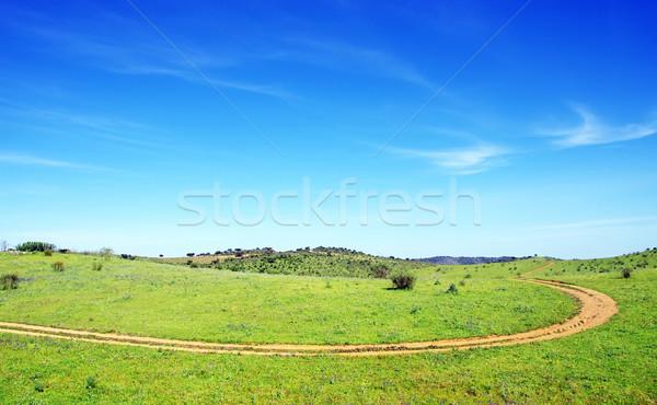 Strada sterrata verde campo cielo erba sole Foto d'archivio © inaquim